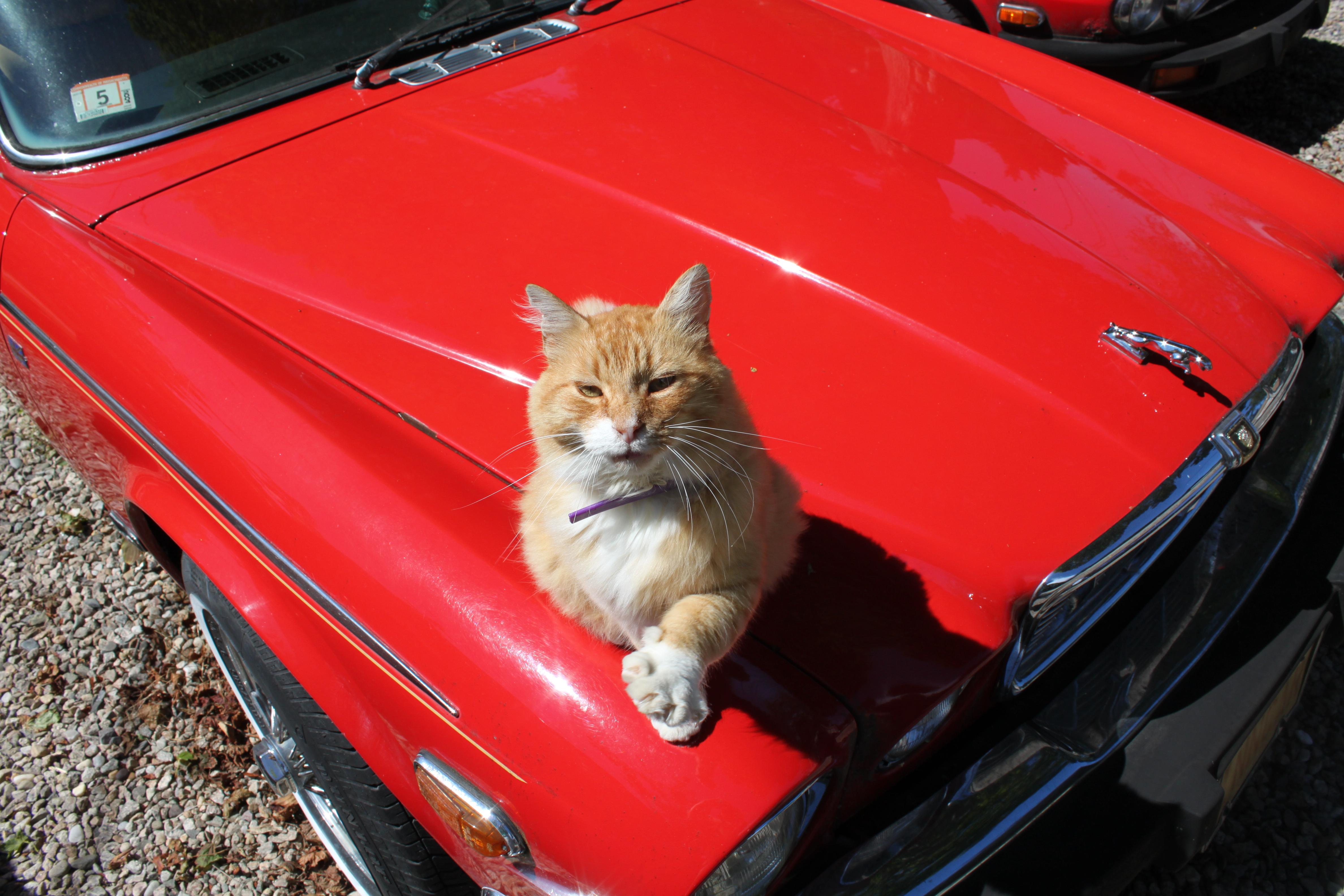 Cat Stops Car Dream Interpretation